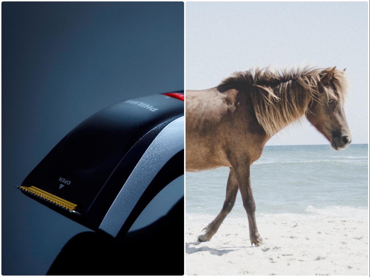 czy golić konia