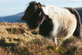 Plusy i minusy golenia konia na sezon zimowy