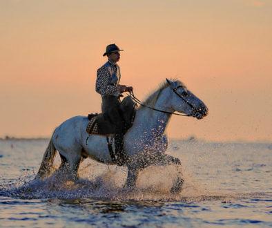 Proszenie konia na komendę