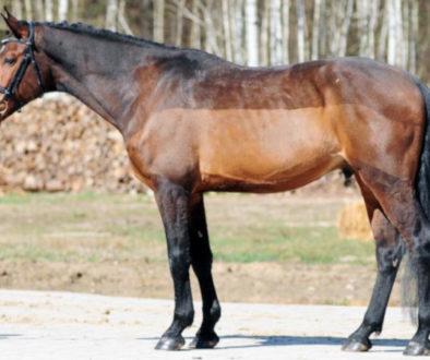 Golenie koni