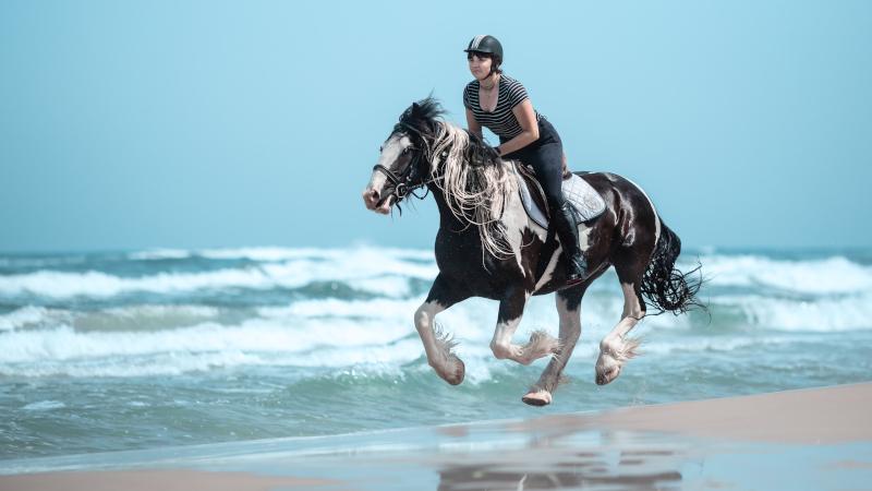 wakacje z koniem