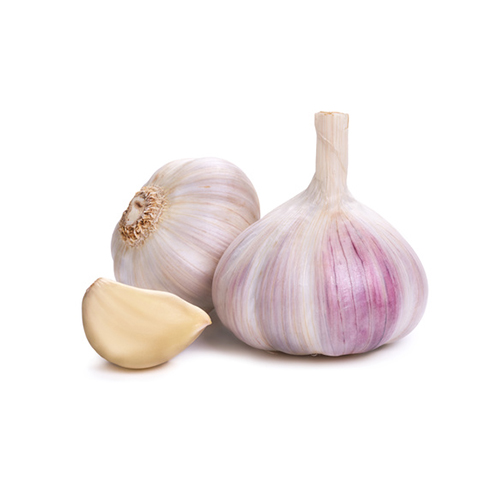 Garlic Isolated against a white background.